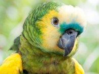 У Бразилії арештували папугу за пособництво наркомафії