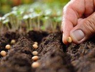 1 травня: коли будете садити насіння, то загадайте бажання