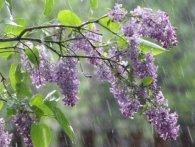 Мінлива хмарність, дощі: погода на тиждень