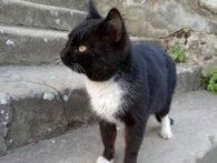 Із Луцька у Лаврів: кіт-паломник пройшов 300 км до рідного монастиря