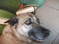 У Луцьку двоє п'яниць побили цеглинами  відому волонтерку та її собаку (фото)