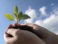 18 травня: цього дня варто садити розсаду