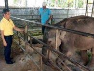 Слоненя замордували на смерть на потіху туристам