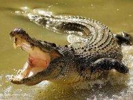 Голими руками зловив крокодила (відео)
