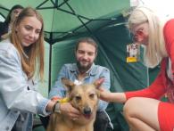 На перших «Мокрих носиках» у Луцьку хазяями ощасливили 10 бездомних собак (відео)