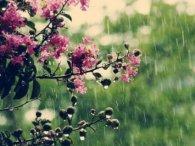 24 травня: якщо сьогодні йде дощ, то ще сорок днів будуть дощовими