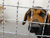 «Проклята живодерка»: засновниця «Ласки» Дана Новарчук знищує бездомних тварин на Хмельниччині?
