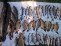 Операція «Нерест»: у волинських браконьєрів вилучили понад 300 кілограмів риби