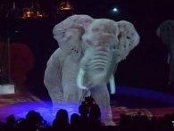 Дорого і гуманно: у німецькому цирку виступи тварин замінили голограмами (відео)