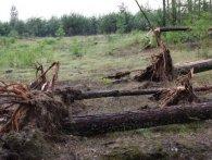 Буревій на Волині: поламані дерева та гілки (фото)