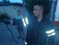 Змія в салоні авто і в дитячій кімнаті: в Україні нашестя плазунів (відео)