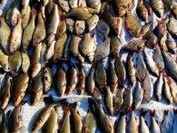 На Волині викрили «рибних браконьєрів»