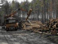 На Рівненщині лісівник-посадовець «штовхав» деревину із заповідників