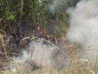 На Волині пожежа охопила гектар лісу (фото, відео)