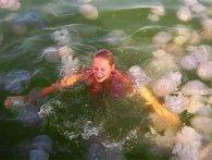 На популярному курорті України – інвазія гігантських медуз (відео)