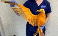 «Екзотична птаха», якій рятівники влаштували душ, «вилиняла» у просту чайку (фото)