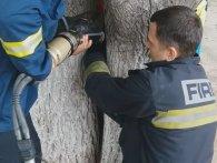 Визволяли рятувальники: семирічна дівчинка застрягла між зрослими деревами (фото, відео)
