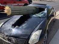 Як у блокбастерах: величезний кактус пробив лобове скло Infiniti