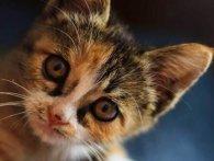 На Волині під виглядом перетримки жінка вбиває кошенят, – соцмережі