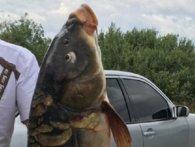 Краще, ніж «Я-а-а-азь!»: волинянин виудив гігантського коропа (фото)