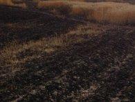 На Волині горіло понад півтора гектара пшениці