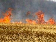 На Київщині згоріло 35 гектарів пшениці