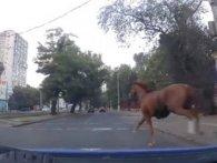 Одеські копи зупинили «на скаку» коня, який чкурнув із іподрому (відео)