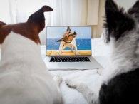 Що люблять собаки дивитися по телевізору