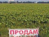 У Зеленського хочуть запустити ринок землі