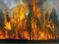 Повідомили, де в Україні найчастіше горять ліси