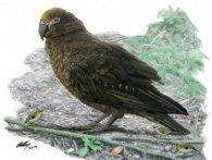 Знайшли гіганського папугу-канібала