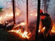 Україну минуло: назвали наслідки пожеж в Сибіру для світу