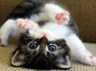 Епічний двобій кошенят підкорив мережу (відео)