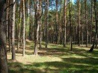 На Волині під суд іде «земельник», який проциндрив 2 гектари державного лісу
