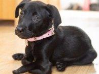 Британка купила щеня з шістьма лапами (фото)