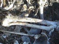 Пролежав в землі більше 50 років: волинянин на власному подвір'ї  знайшов скелет людини