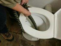 «Лайфхак від запору»: на Рівненщині в громадський туалет заповзла змія (фото)