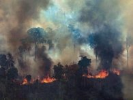 «Легені землі» зчорніли: як виглядає з космосу глобальне лихо – пожежі в Амазонії