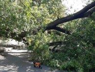 У Києві на жінку впало дерево