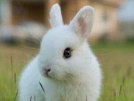100 тисяч доларів: у США підліток купив острів для кроликів (відео)