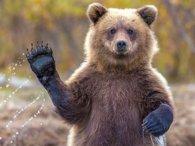 Паніка у готелі: заходиш у туалет – а там ведмідь (відео)