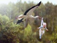 «Доставка дітей»: на авто посеред Львова приземлився лелека (відео)