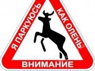 «Шль*ндра, рот закрий!»: у Києві неадекватний водій поскандалив із пішохідкою (відео)
