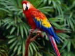 Розмова закоханих папуг розчулила мережу (відео)