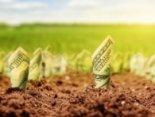 Повідомили, коли запрацює ринок землі в Україні