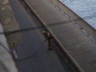 Справа мінера мосту Метро у Києві: суд не повірив чесному слову Авакова